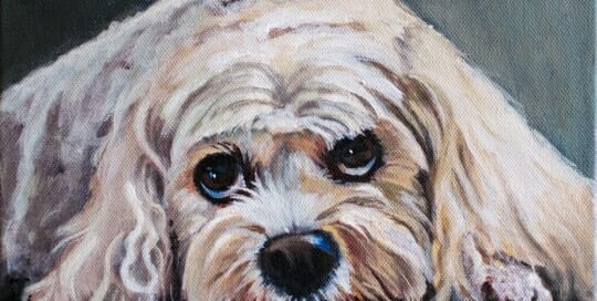 LAc Studio - Pet Portrait Painting of Muffin by Lisa Acciai