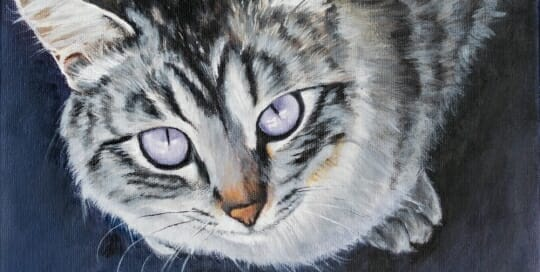LAc Studio - Pet Portrait Painting of Cat with lavender eyes by Lisa Acciai