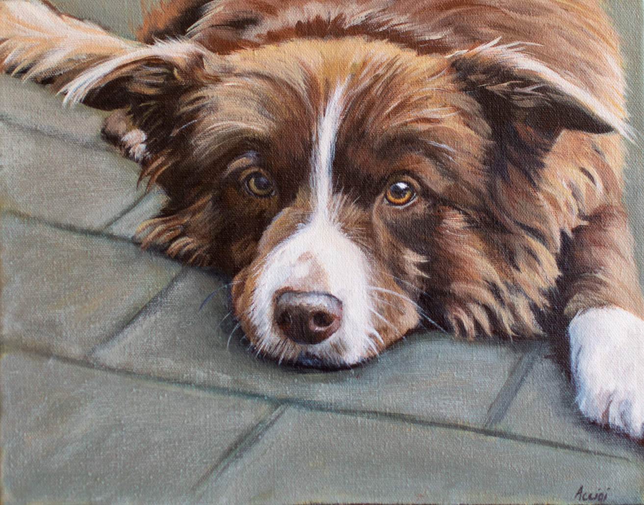 """Just Chilin""border-collie by Lisa Acciai of LAcStudio"