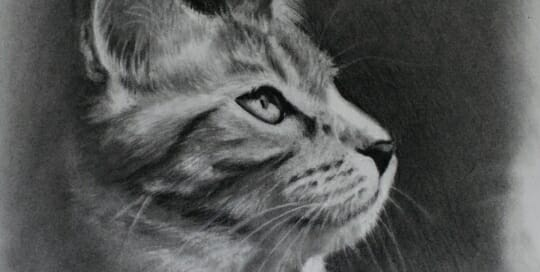 charcoal cat Drawing by Lisa Acciai LAcStudio