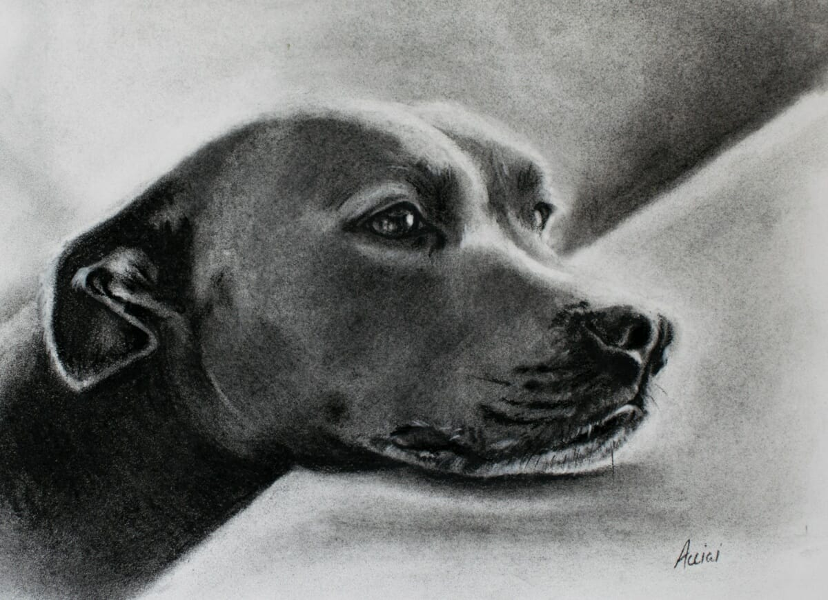 Dreaming dog Drawing by Lisa Acciai LAcStudio