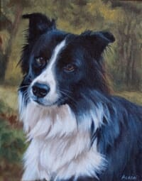 Draco - border-collie by Lisa Acciai of LAcStudio