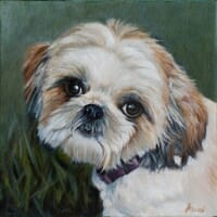 Pixie - Shih Tzu by Lisa Acciai