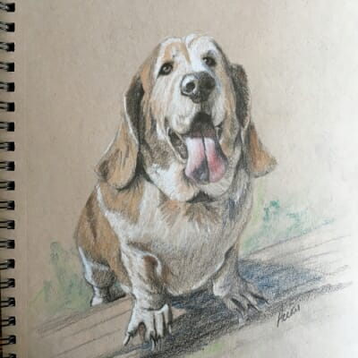 baxter-the-basset-by-lisa-acciai