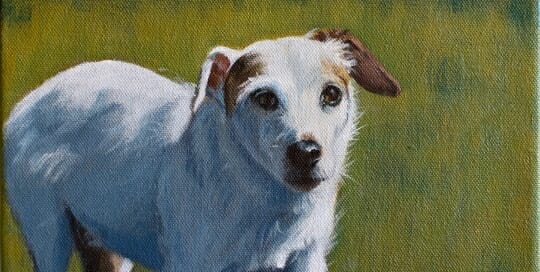 Sugar - Jack Russell by Lisa Acciai