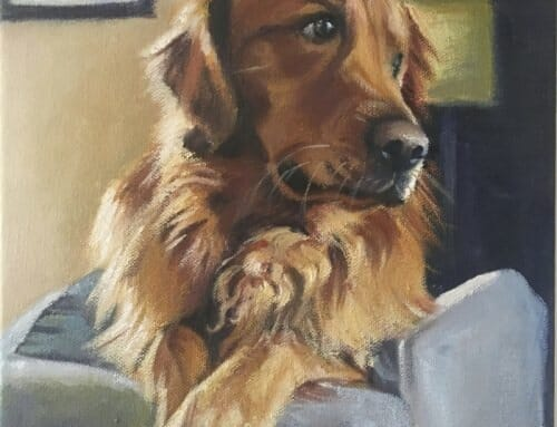 Patiently Waiting – Golden Retreiver