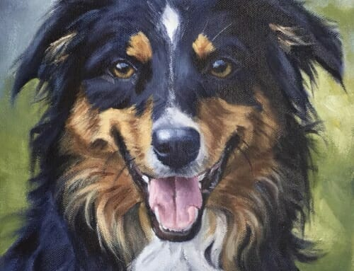 Karma – English Shepherd