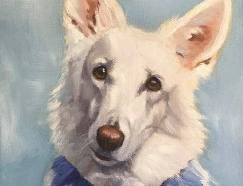 Sugar – white German Shepherd