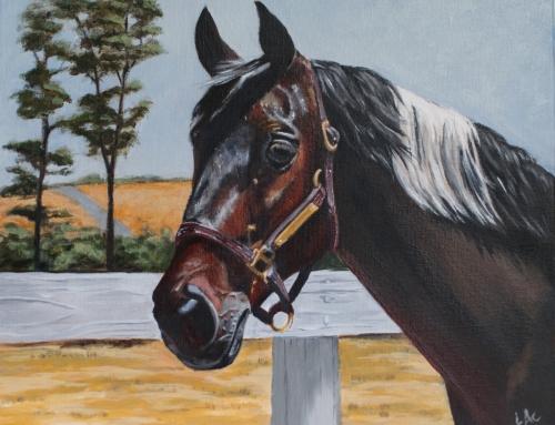 DArtagnan – horse