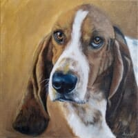 Bassett Hound by Lisa Acciai of LAcStudio