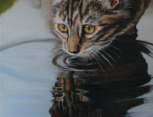 Reflecting Cat