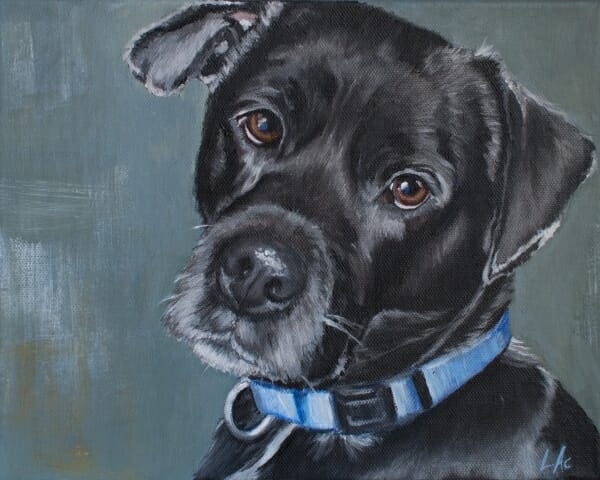 LAc Studio - Pet Portrait Painting of Crash by Lisa Acciai