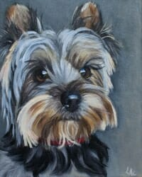 Yorkie by Lisa Acciai of LAcStudio