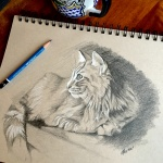 Maine Coon Cat Sketch by Lisa Acciai