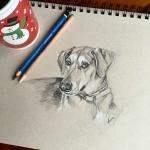 dog sketch by Lisa Acciai