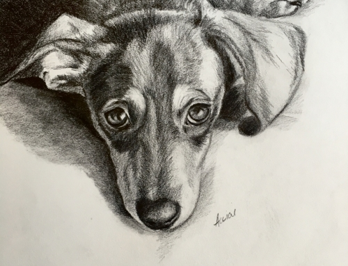 Adorable dogs, a watchful cat, and a Woodpecker – Quick Morning Sketches