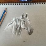 horse-sketch-Lisa-Acciai-LAcStudio