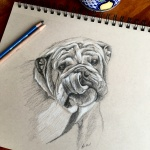 pug-by Lisa-Acciai-LAcStudio