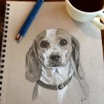 pup-sketch-Lisa-Acciai-LAcStudio