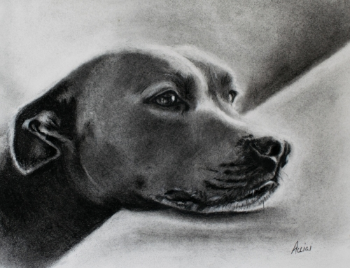 Dreaming Pup – Charcoal on paper
