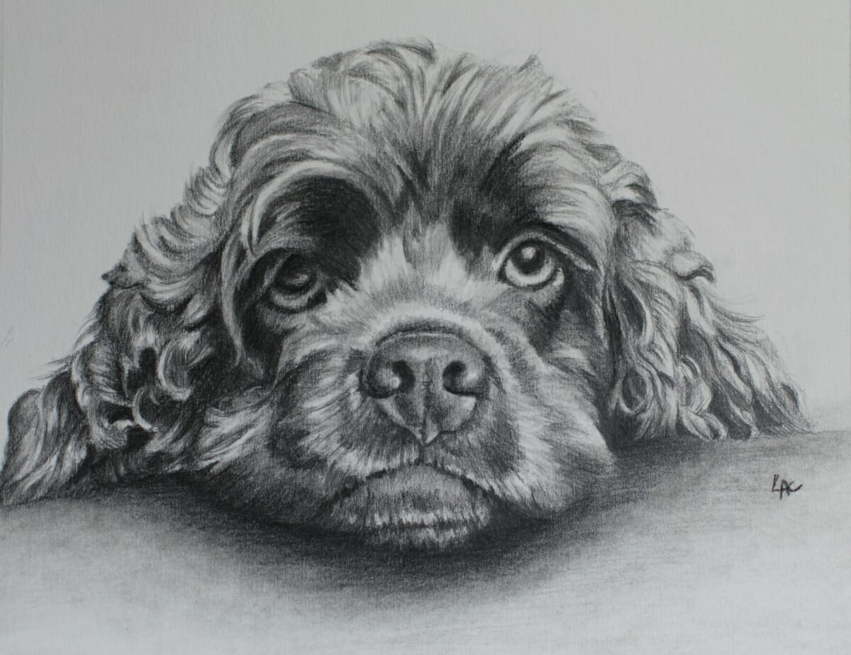 jethro Drawing by Lisa Acciai LAcStudio