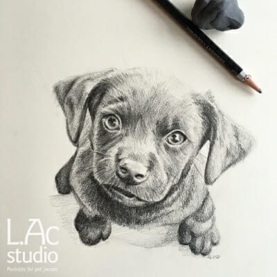 puppy-sketch-Lisa-Acciai-LAcStudio