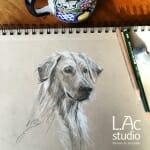 2 retreivers-sketch-Lisa-Acciai-LAcStudio