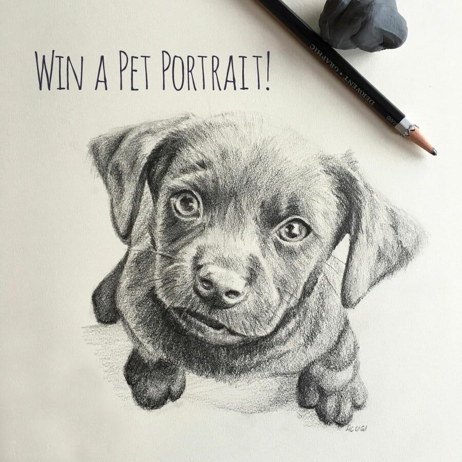 Pet Portrait Giveaway Winner