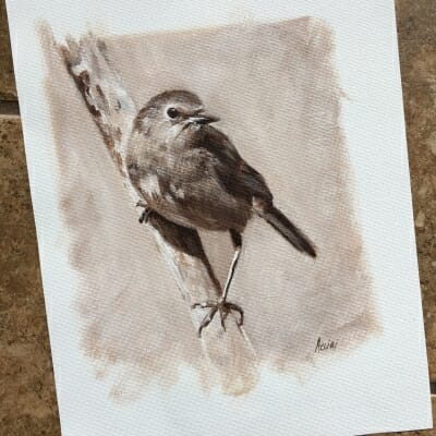 Robin Bird study -Lisa Acciai
