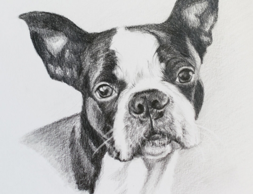 Eyes of a Dreamer – Boston Terrier