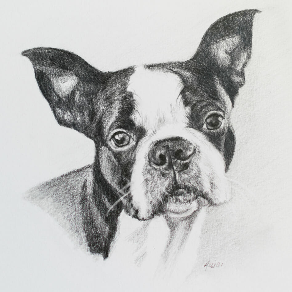 Boston-Terrier-Lisa-Acciai-