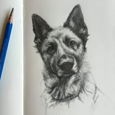 German Shephard -sketch by Lisa Acciai