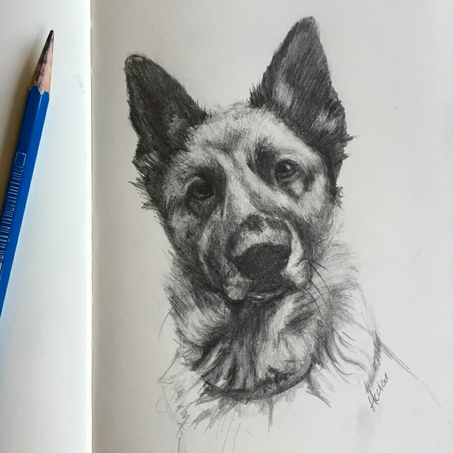 German Shephard -sketch by Lisa Acciai