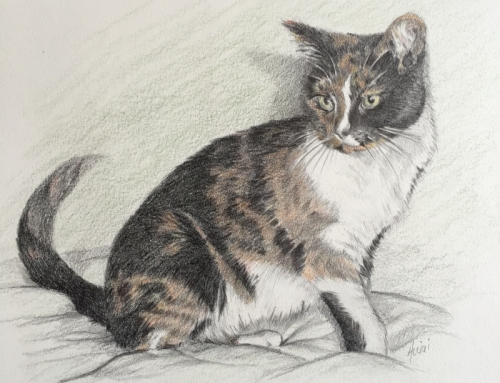 The Winner of the Pet Portrait Contest is…