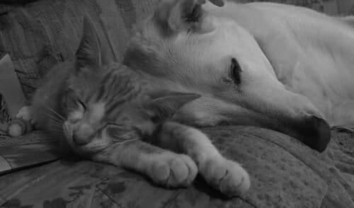 Steve and Jake asleep