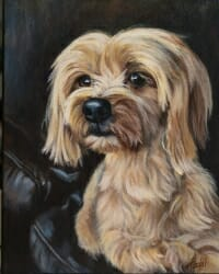 Coco - Yorkshire Terrier by Lisa Acciai