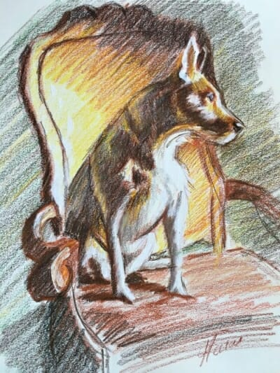 Terrier sketch by Lisa Acciai