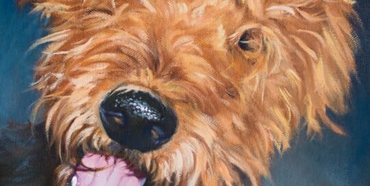 Little Bit Airedale painting by Lisa Acciai