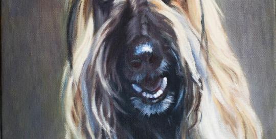 Bella - afghan hound - by Lisa Acciai - oil