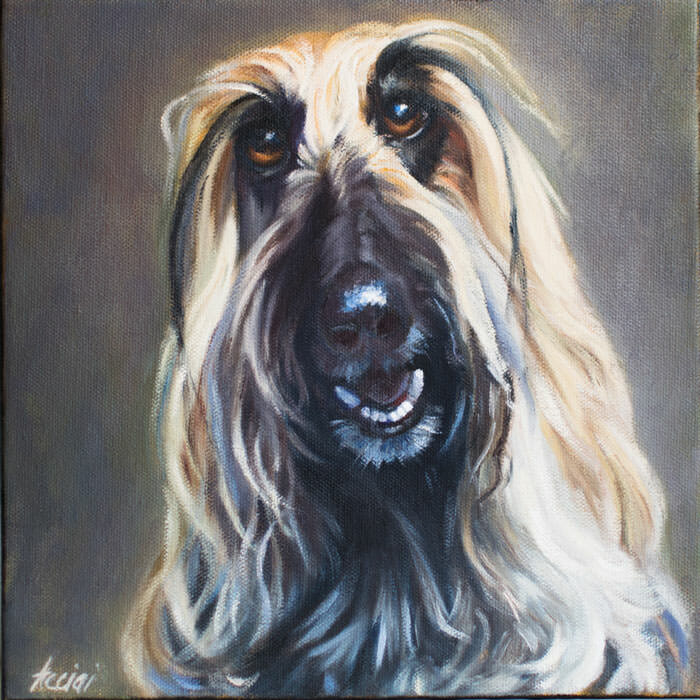 Bella - afghan hound - by Lisa Acciai - oil