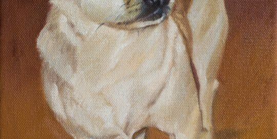 Lil Bear oil painting - Lisa Acciai of LAc Studio