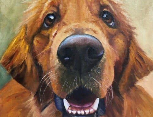 Miles – Golden Retriever