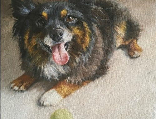 Hank – the Australian Shepherd