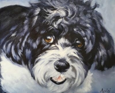 Bailey - 8x10 oil painting by Lisa Acciai
