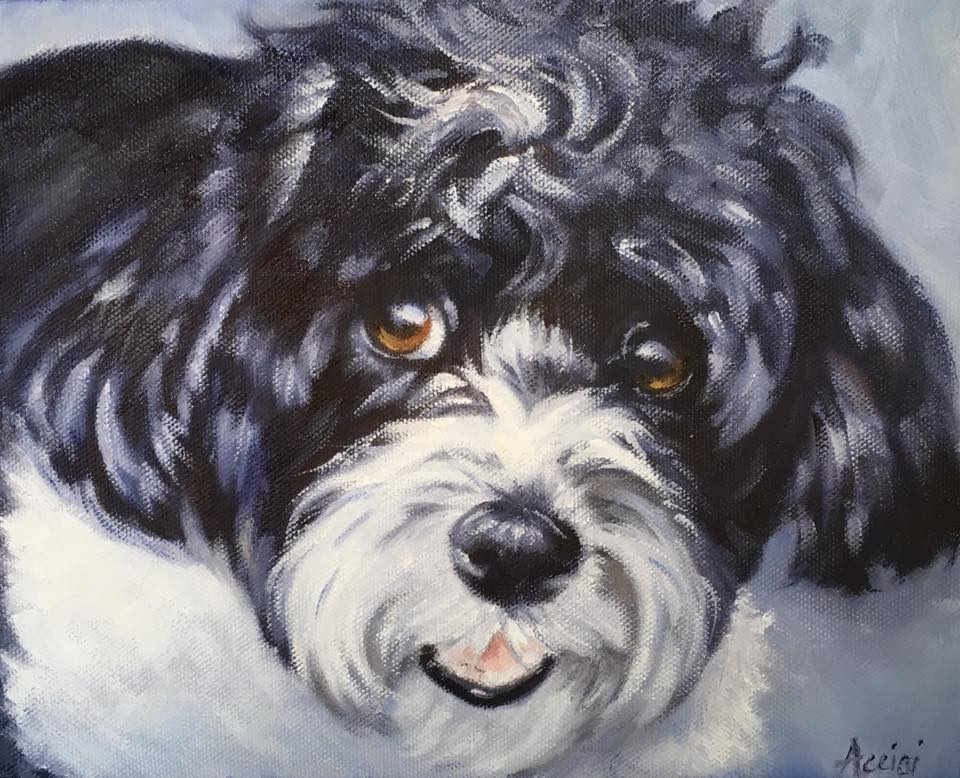 Bailey - 8x10 oil painting by Lisa Acciai