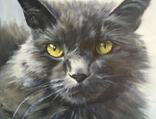 Rudy – cat