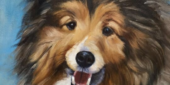 Rudy-shepherd oil painting by Lisa Acciai