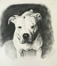 Max-charcoal drawing -Lisa-Acciai