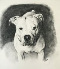 Max-charcoal drawing -Lisa-Acciai