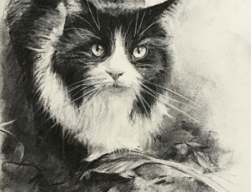 Biscuit – Tuxedo cat